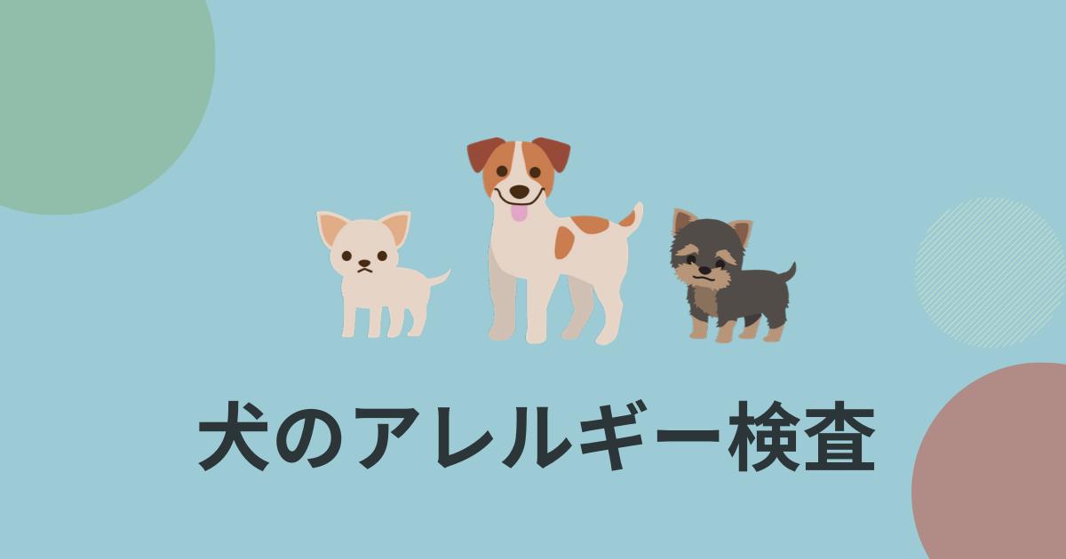 犬のアレルギー検査アイキャッチ画像