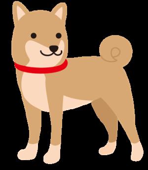 shiba-dog-cute-image
