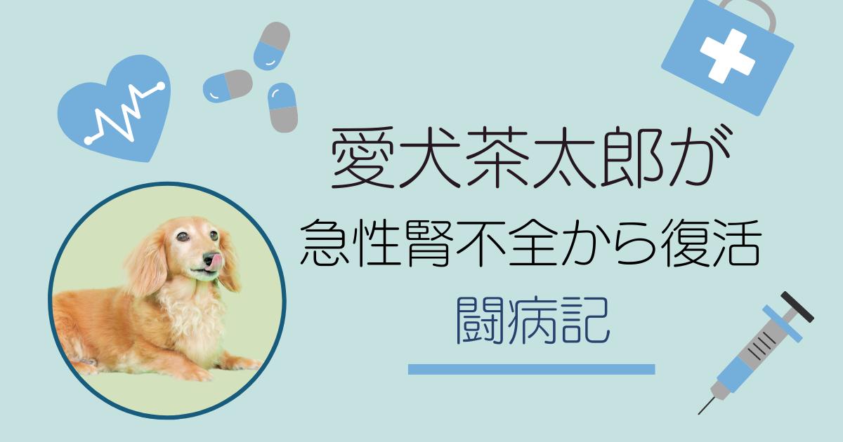 愛犬茶太郎が急性腎不全から復活した闘病記のアイキャッチ画像
